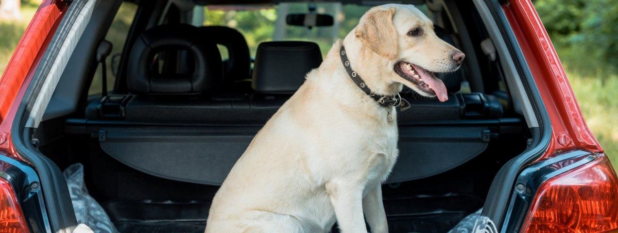 Tips to Drive with A Pet in Dubai